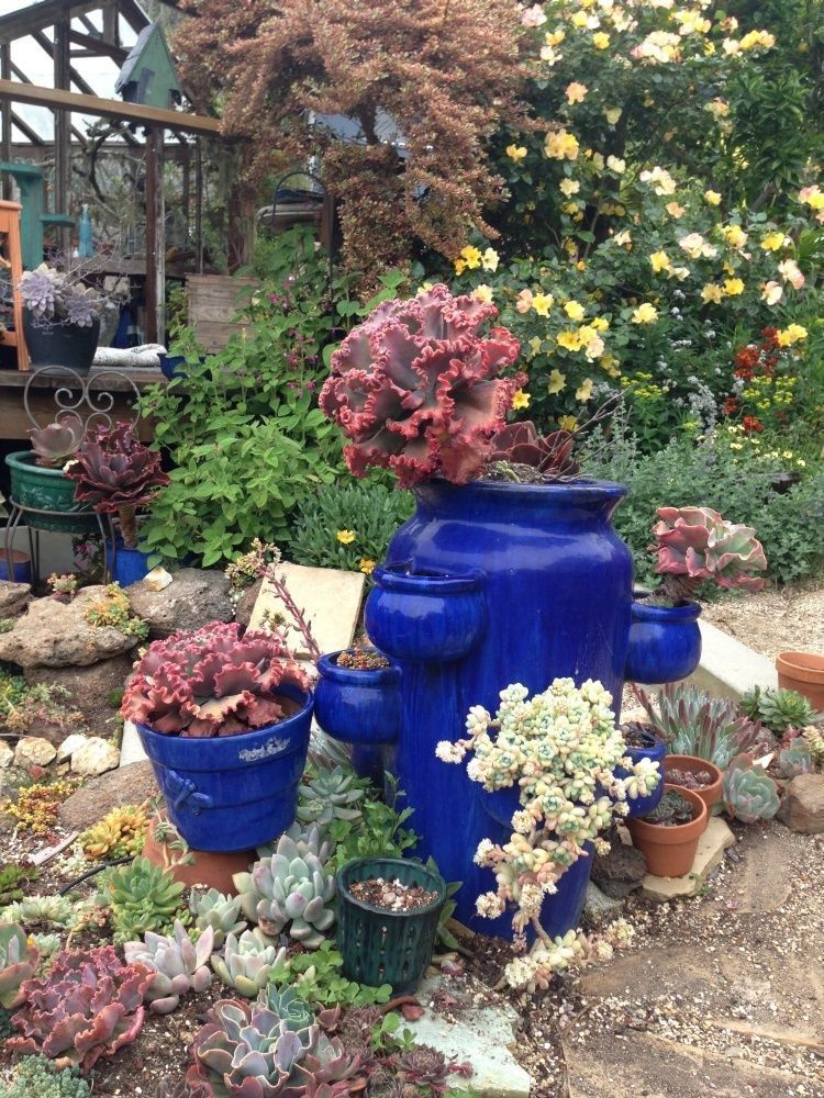 Suculants, succulents, backyard oasis wwwnewavenuehomes, small