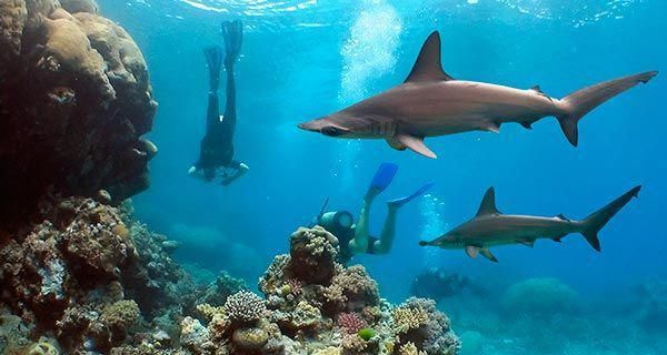 Bonaire scuba diving- master diver Rec this and Aruba for ...