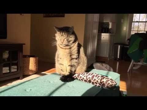 A cat sneezing in slow motion.... just because.