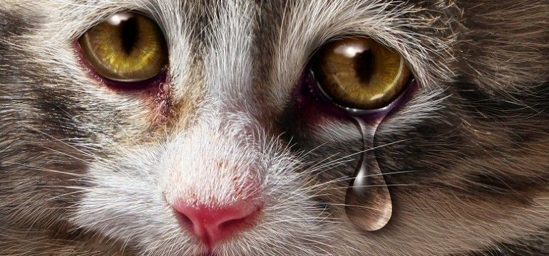 Did you know? 71% of pet-owning women entering women's shelters reported that their batterer had injured, maimed, killed or threatened family pets for revenge or to psychologically control victims;…