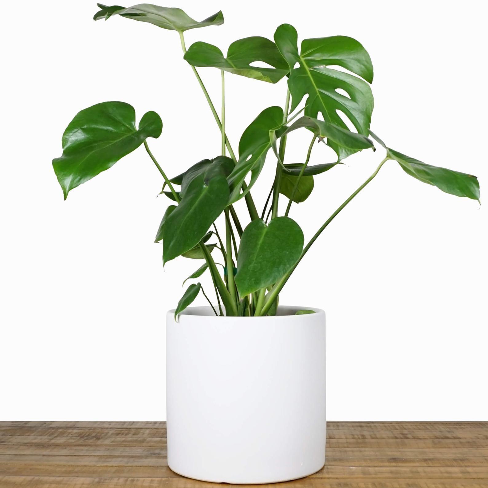 Indoor Planter Ceramic Plant Pot 15 12 Etsy Ceramic Plant Pots Large Flower Pots Indoor Planters