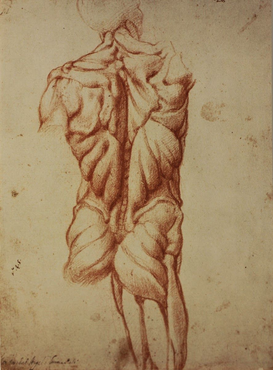 Michelangelo: Anatomy Studies | The torso | Pinterest | Michelangelo ...
