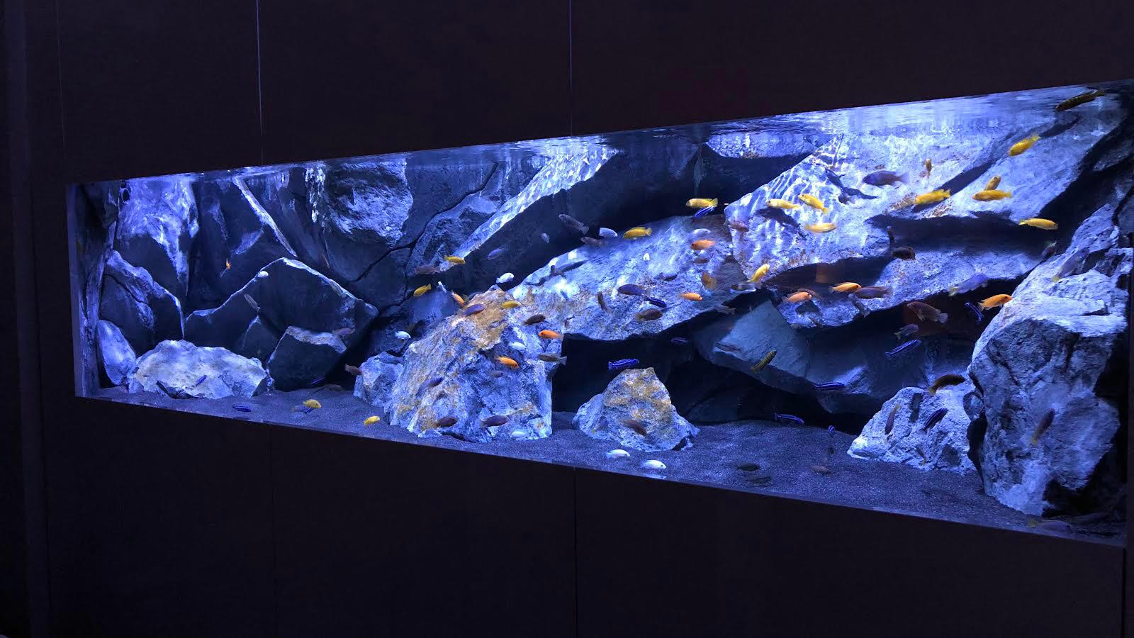 Epingle Par Aquadecor Sur Aquadecor Aquariums