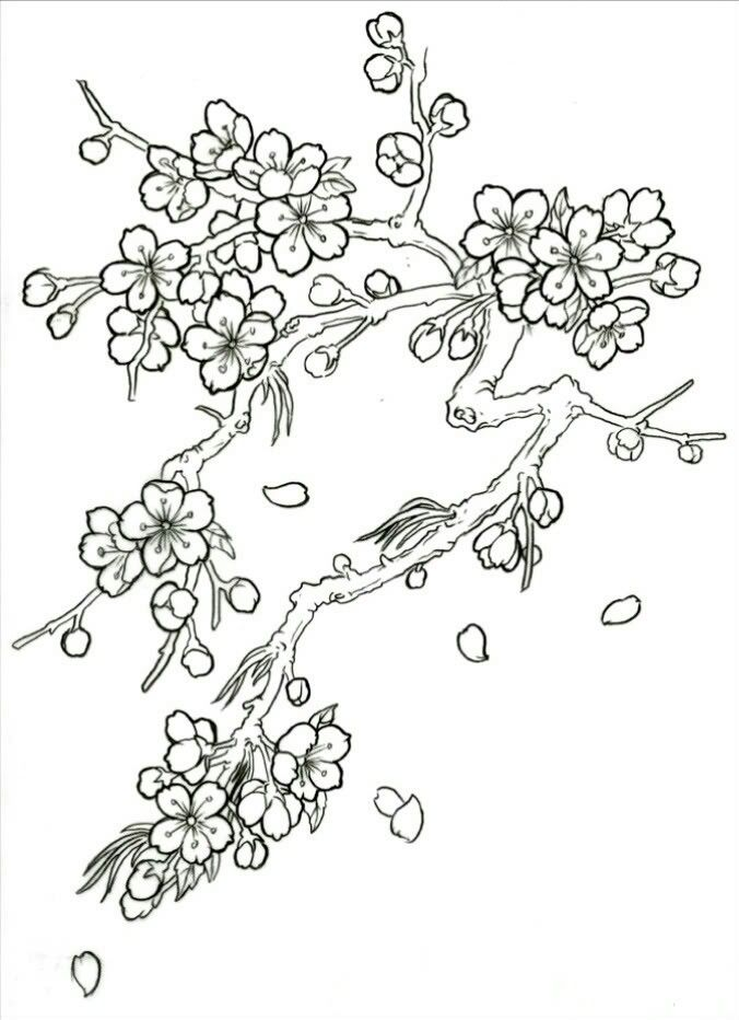 Pin By Rosa Costa On Drawings Flower Drawing Cherry Blossom Drawing Blossoms Art