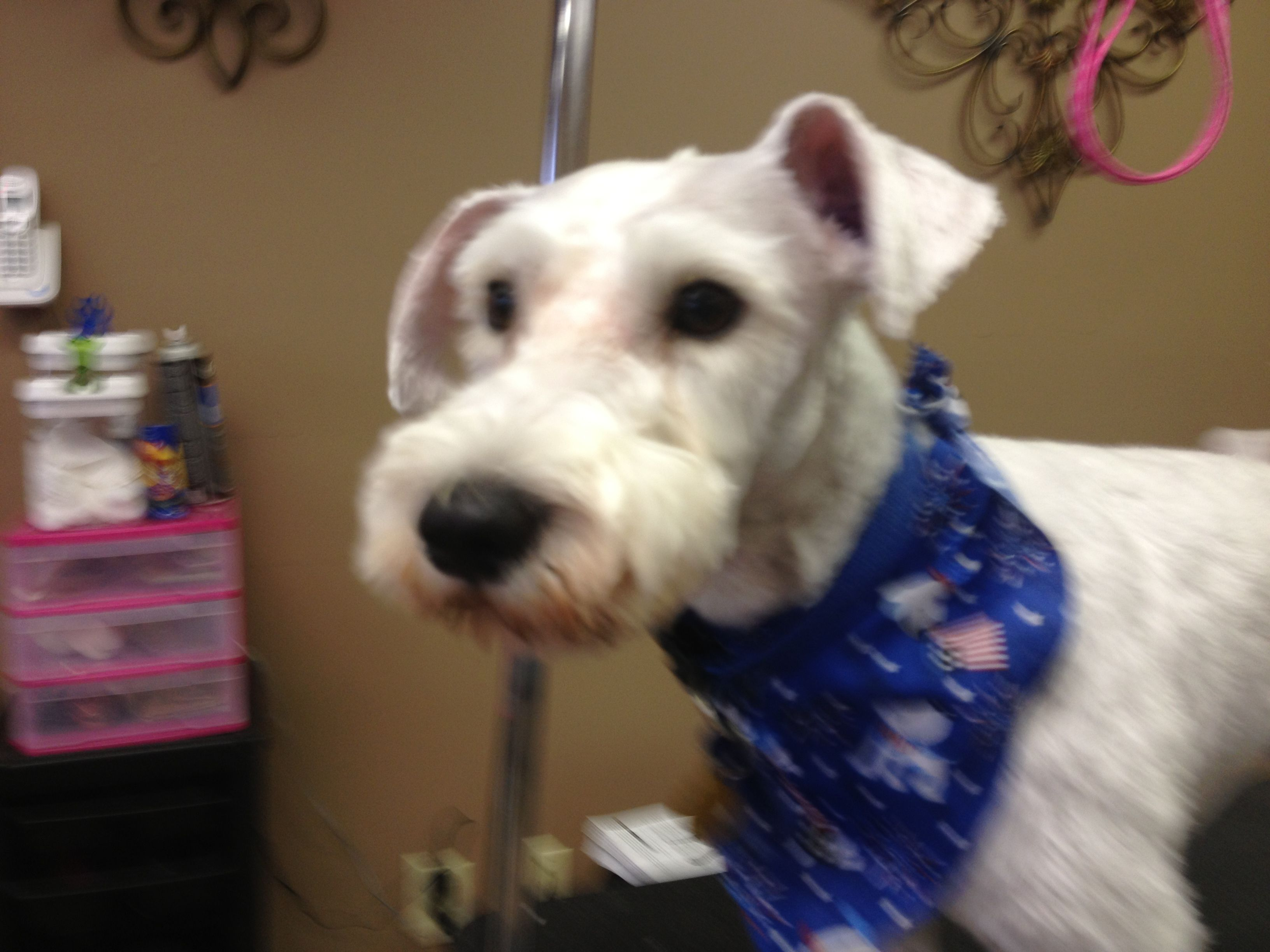 Pin By Central Ohio Dog Grooming Academy On Codga Dogs And Pups