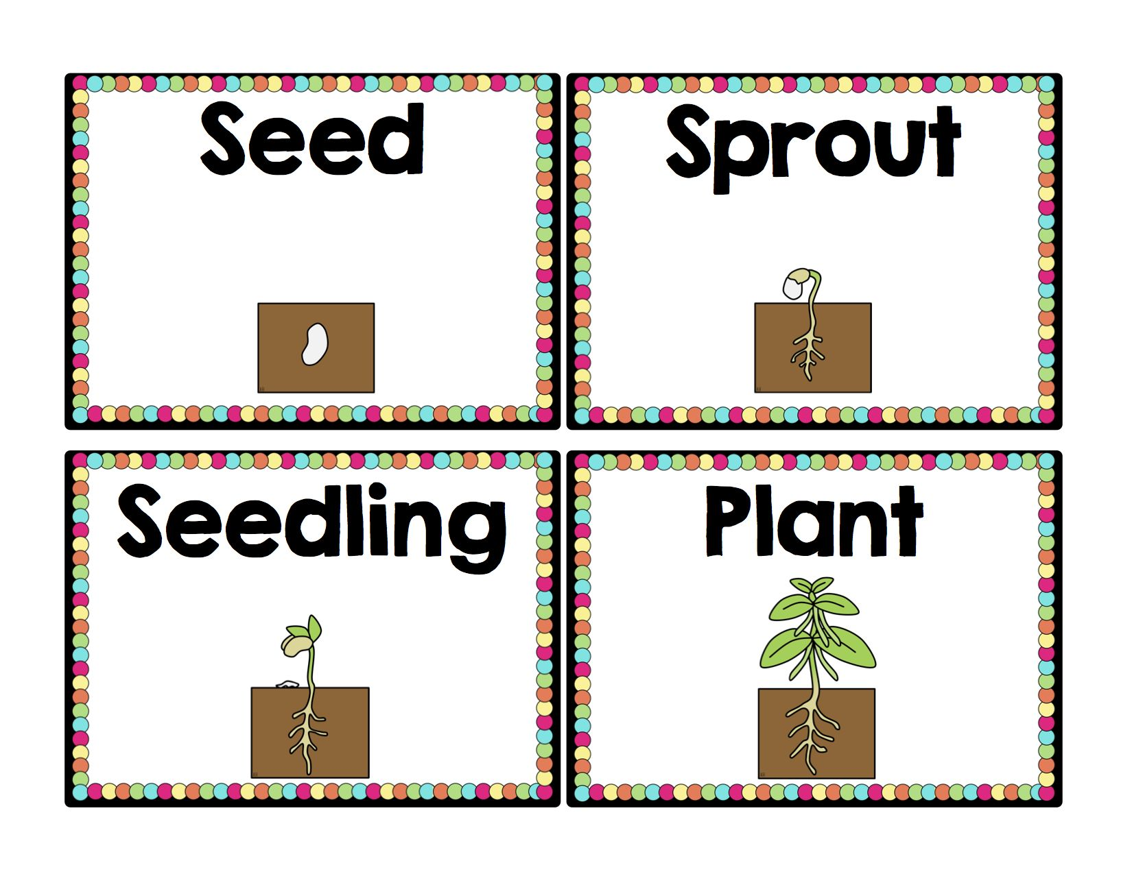 Life Cycle Of A Plant Sequencing Cards Plant Life Cycle Plants Sequencing Cards [ 1275 x 1650 Pixel ]