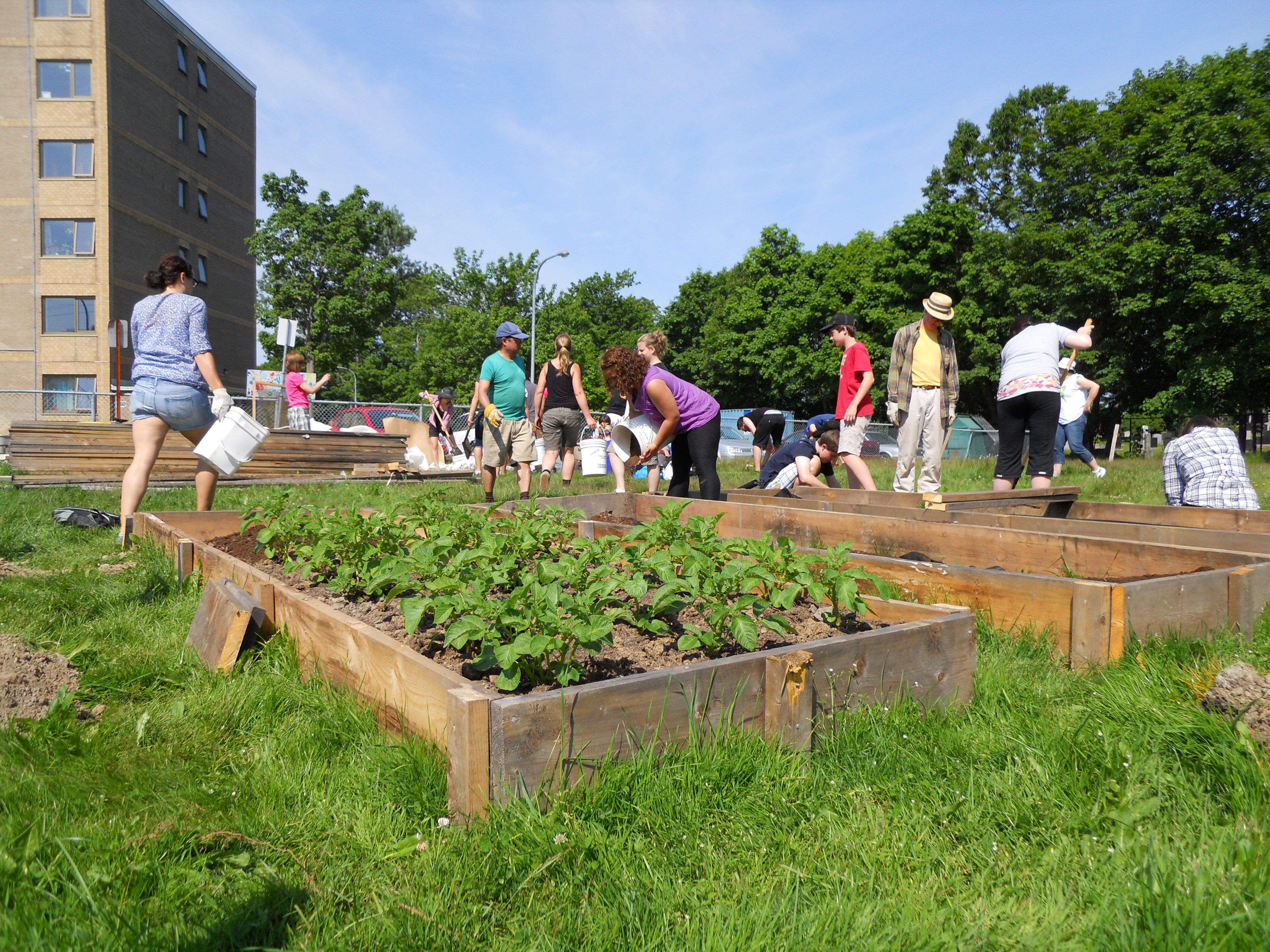 10 Steps to Starting a Community Garden | Small backyard ...