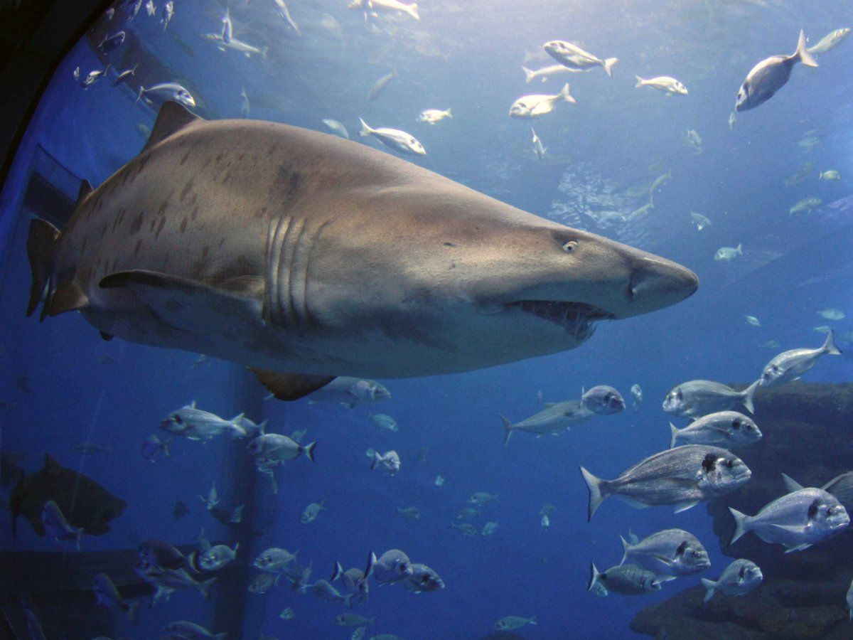 There S A Disturbing Reason For The Recent Surge In Shark