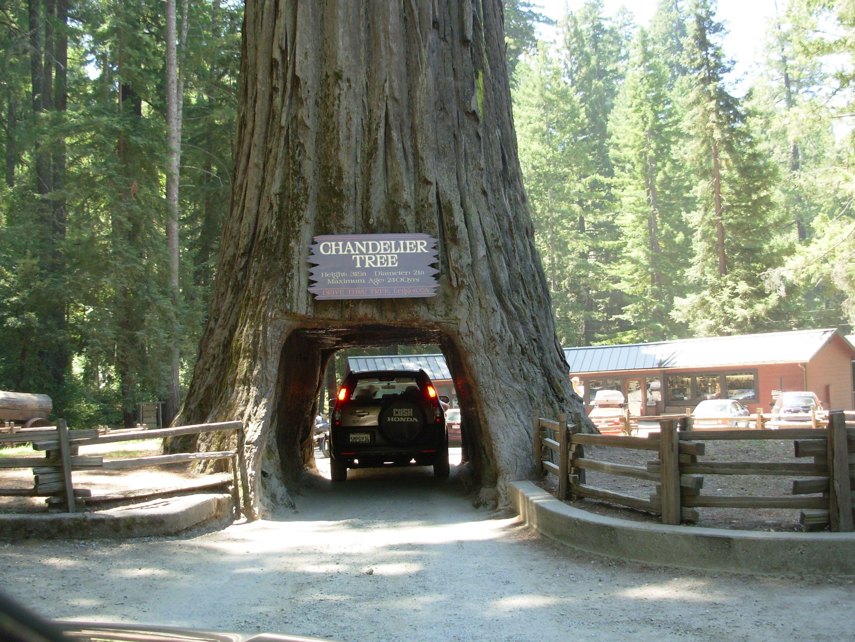 Enjoy Roadside Attractions Along California S Redwood Highway Slow Family Roadside Attractions Roadside Seattle To San Francisco