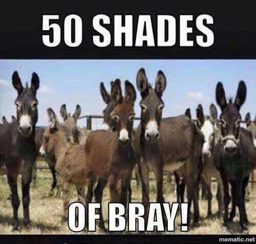 50 Shades of Bray! (With images)   Silly animals, Cute animal ...