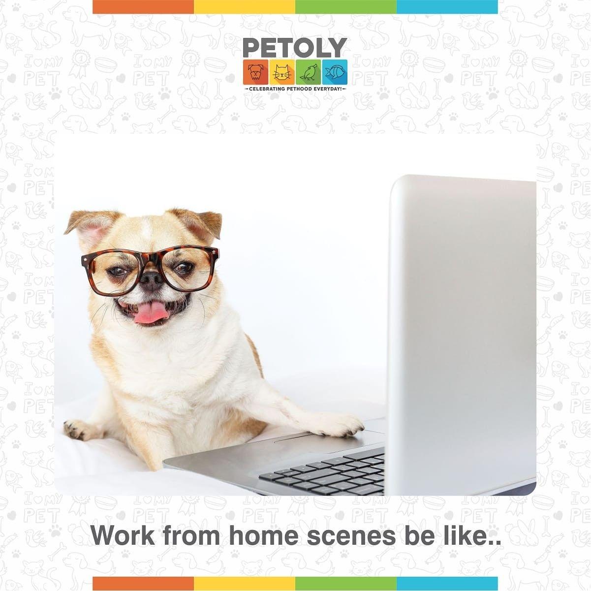 Pin On Pet Memes