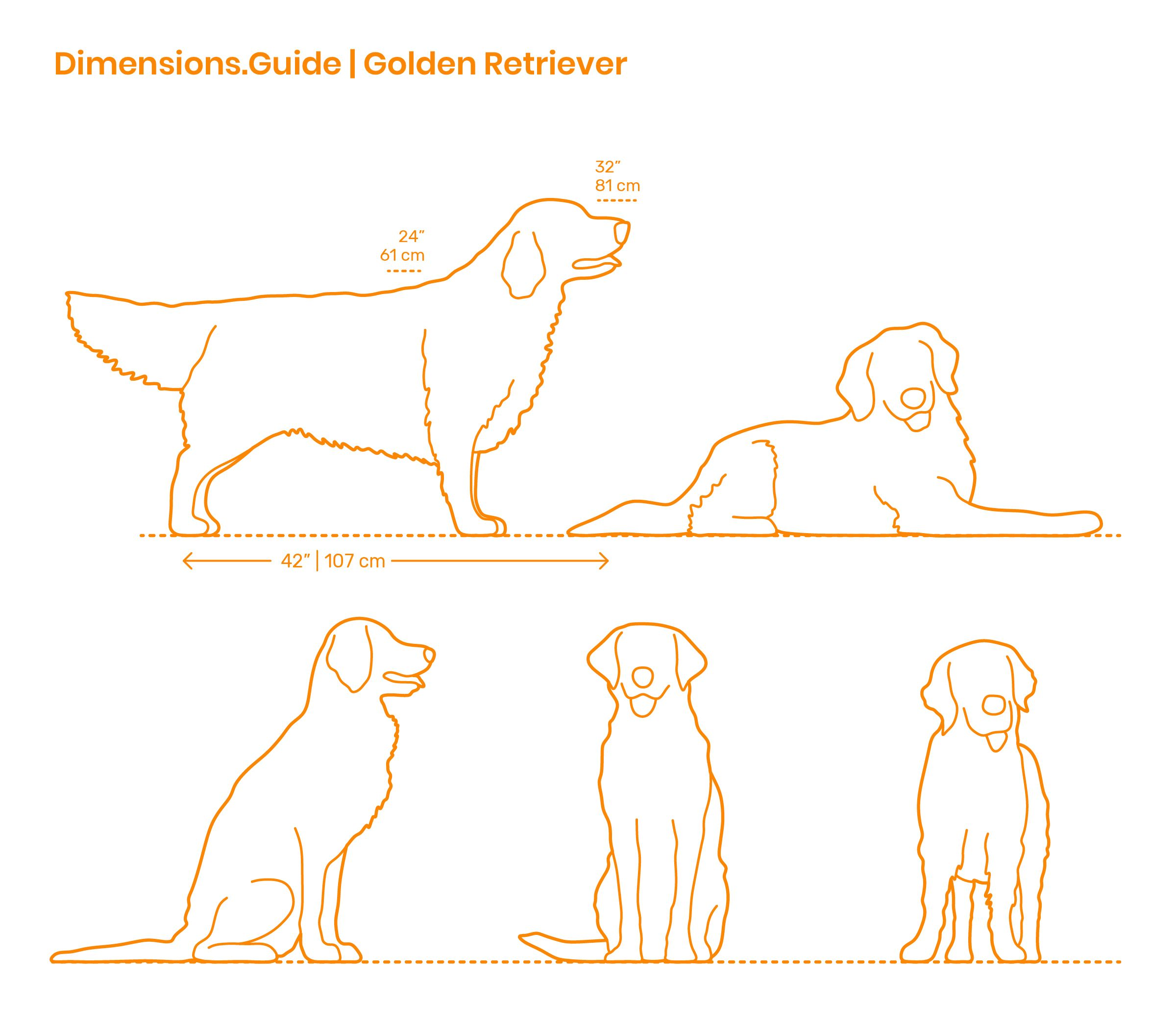 Golden Retrievers Are A Medium To Large Breed Of Dog Bred For