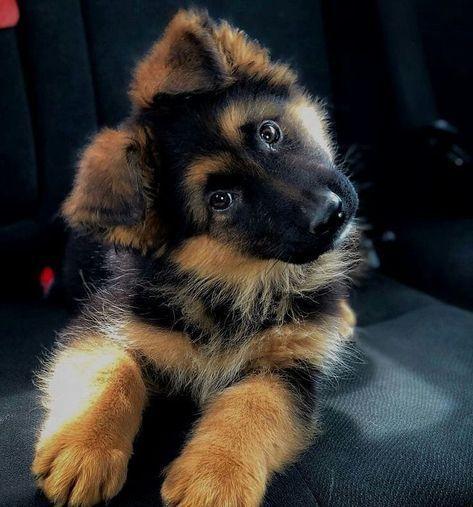 21 Dog dream meaning, Black, White, Brown, Bite, Attack & Lost