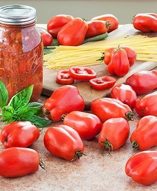 San Marzano Tomato | If you plan to can, plant at least 6 plants for a family of four.