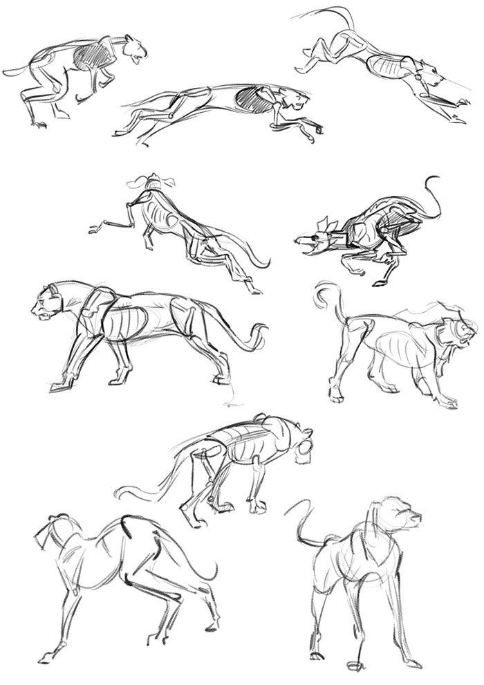 Let's Animate: STUDY: 4 Legged Animals