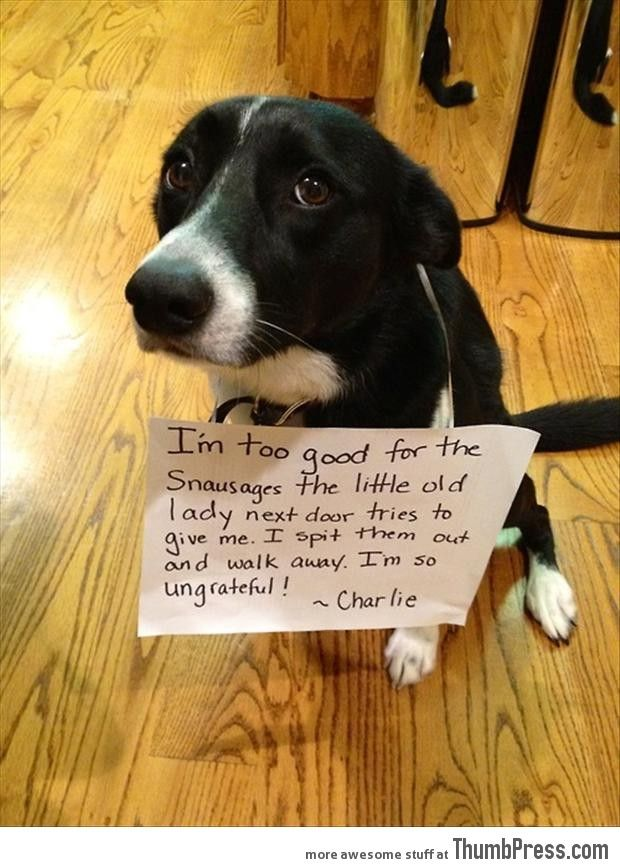 Dogs With Notes The Best Of Dog Shaming 50 Funny Pictures Dog