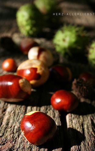 shiny chestnuts seasons autumn pinterest herbst bilder herbst und sch ne hintern. Black Bedroom Furniture Sets. Home Design Ideas