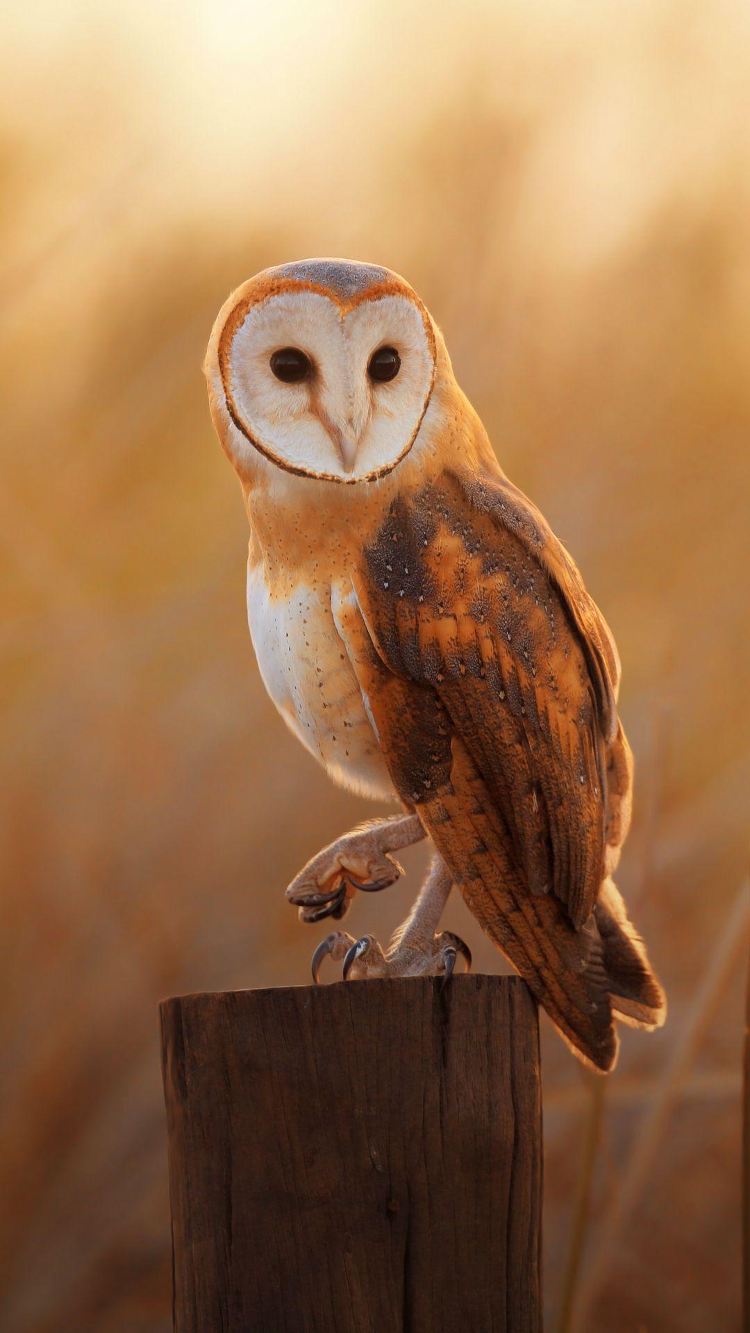 Owl Screensaver : screensaver, Wallpaper🦉, Wallpaper,, Wallpaper, Iphone,