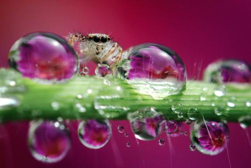 Gli invertebrati fotografati in un mondo da sogno, nelle foto di Nordin Seruyan