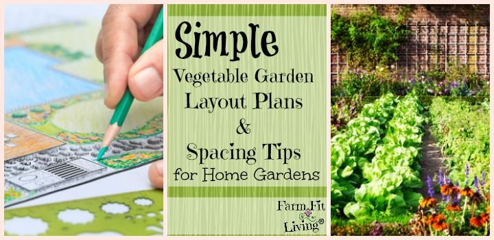 are you looking for more simple vegetable garden layout plans and spacing tips to maximize efficiency in your home garden space youll find it here - Vegetable Garden Layout Plans And Spacing