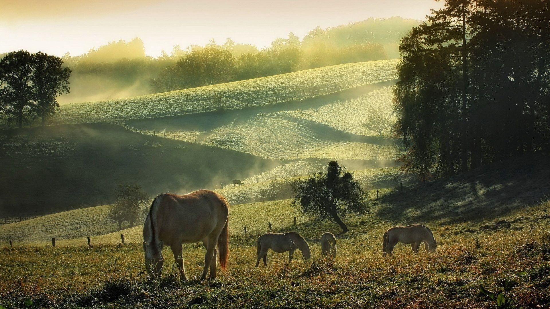 Download Wallpaper Horse Summer - 17bb2e63a5d68c2acb494e6cd0153722  You Should Have_151130.jpg