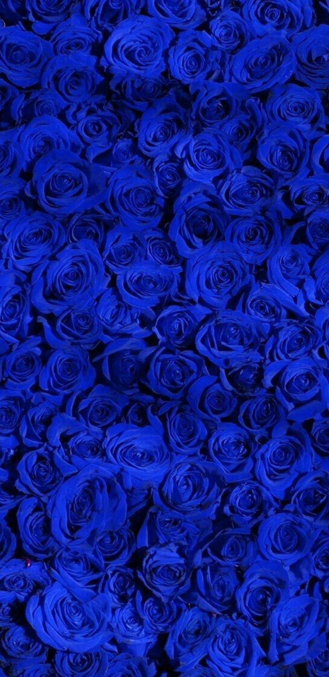 Pin By Bina On Iphone Wallpapers Blue Roses Wallpaper Blue