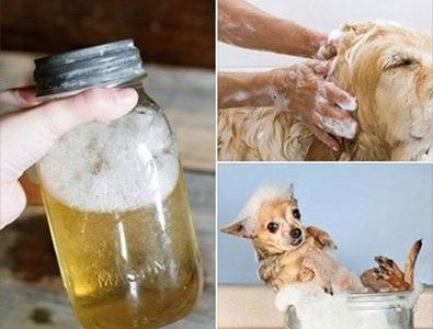 shampoooooocaes