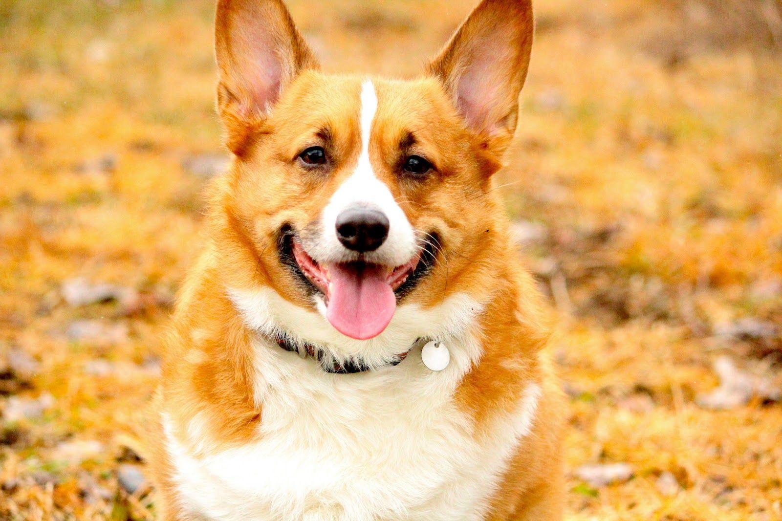 Happy Indie, Best dogs