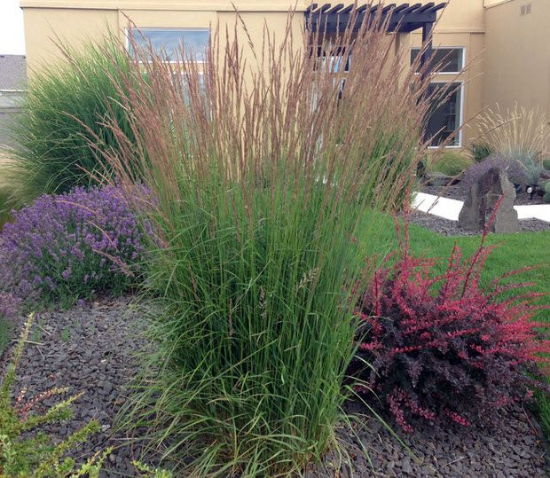 Ornamental grasses update your curb appeal with just one for Tall grass garden