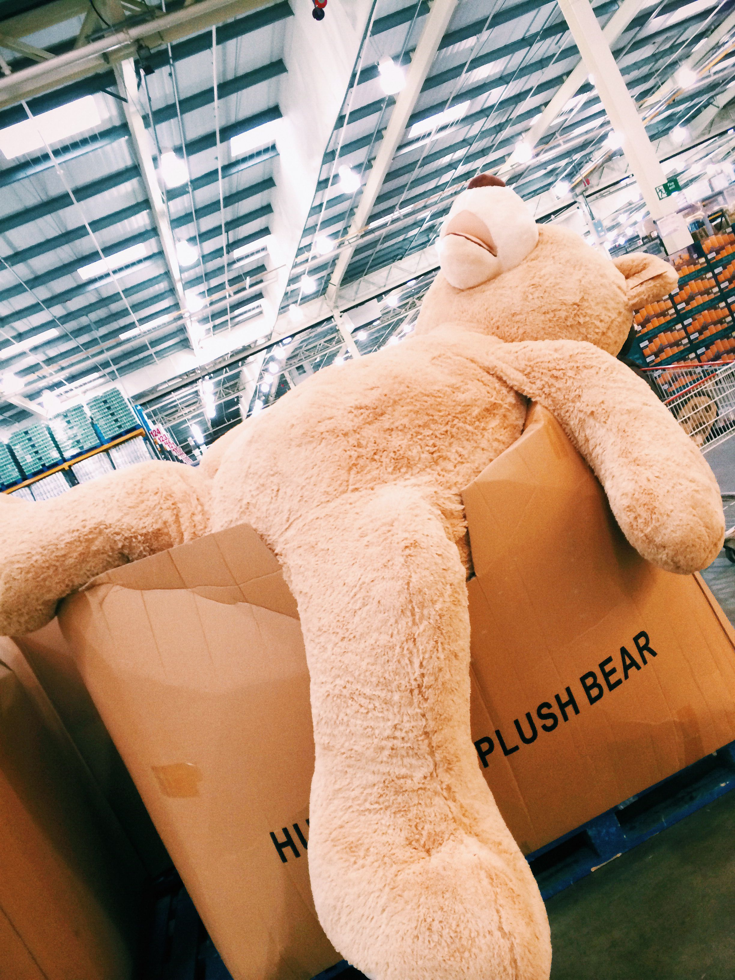 Costco teddy bear available from