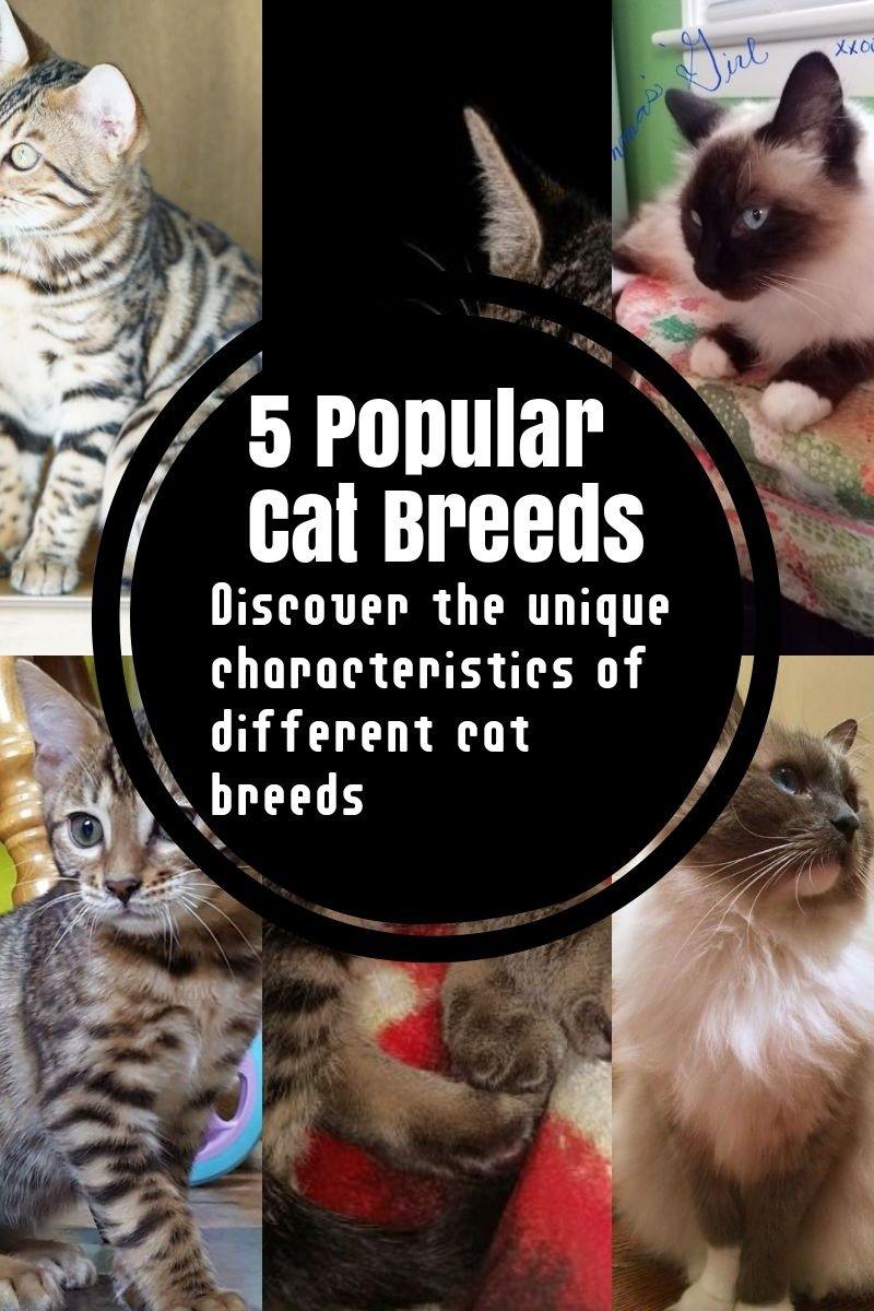The Most Common Cat Breeds Cat Breeds Common Cat Breeds Popular Cat Breeds