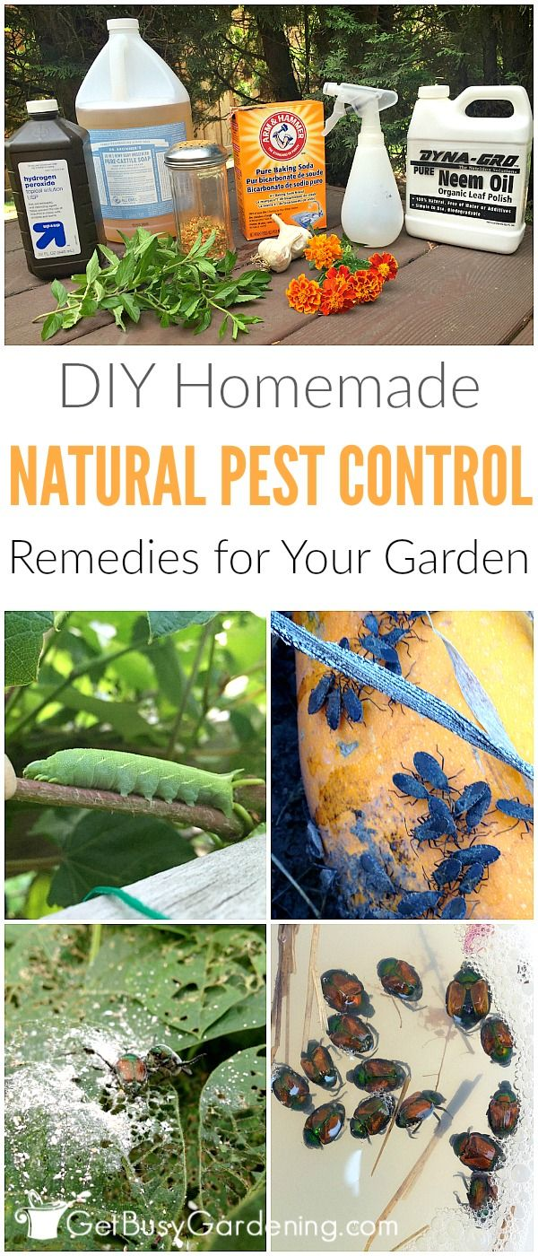 Donu0027t Use Chemical Pesticides To Control Bugs In Your Garden; They Do More