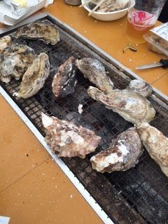 糸島市の福吉漁港にある牡蠣小屋かきのますだ で牡蠣を堪能 ここは天神や博多駅から電車で行けるから運転を心配せずにお酒が楽しめるのが魅力()v 牡蠣はもちろん地元でとれた新鮮な魚介類をたっぷりと楽しめますよ ポン酢や一味なんかの調味料が用意されているのでいろいろな楽しみ方ができるのもいいですね() 皆さんもぜひ足を運んでみてくださいね tags[福岡県]