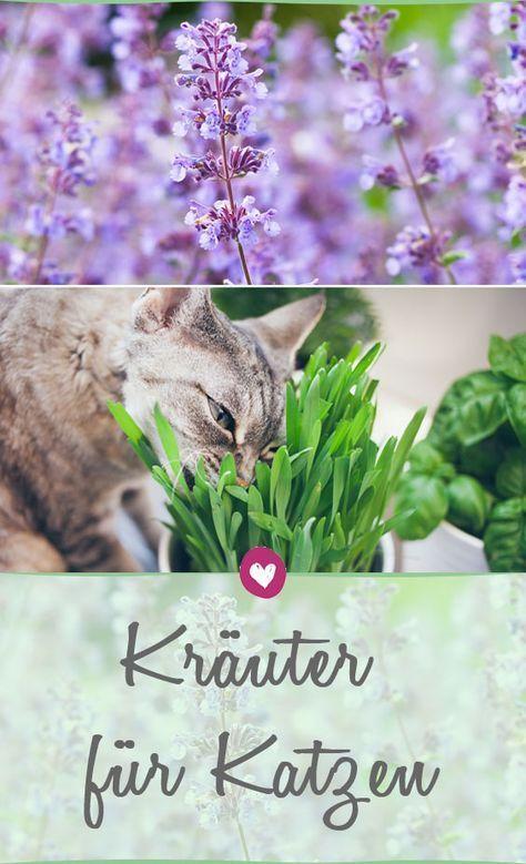 Photo of Kräuter für Katzen: Ein kleiner Garten nur für die Mieze
