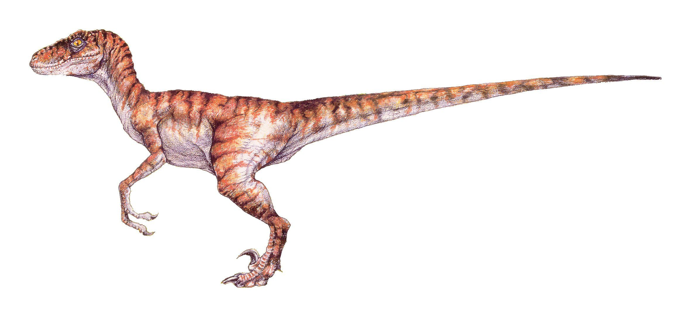 Raptor dinosaur google search more tattoo ideas raptor dinosaur jurassic park dinosaur - Raptor dinosaure ...