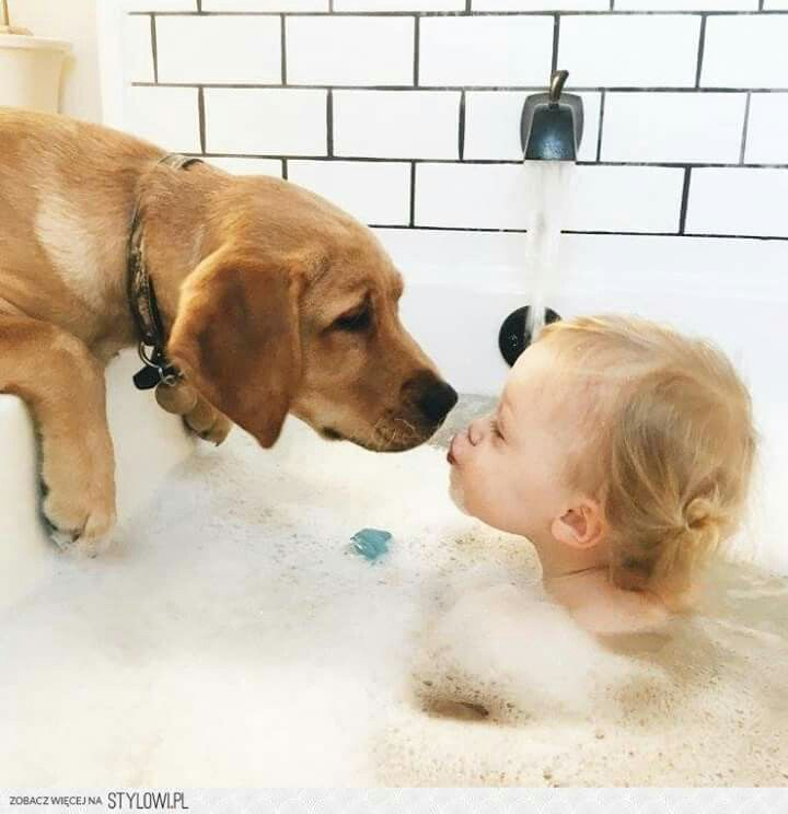 Bath With Dog Animals 15 Dogs Cute Animals