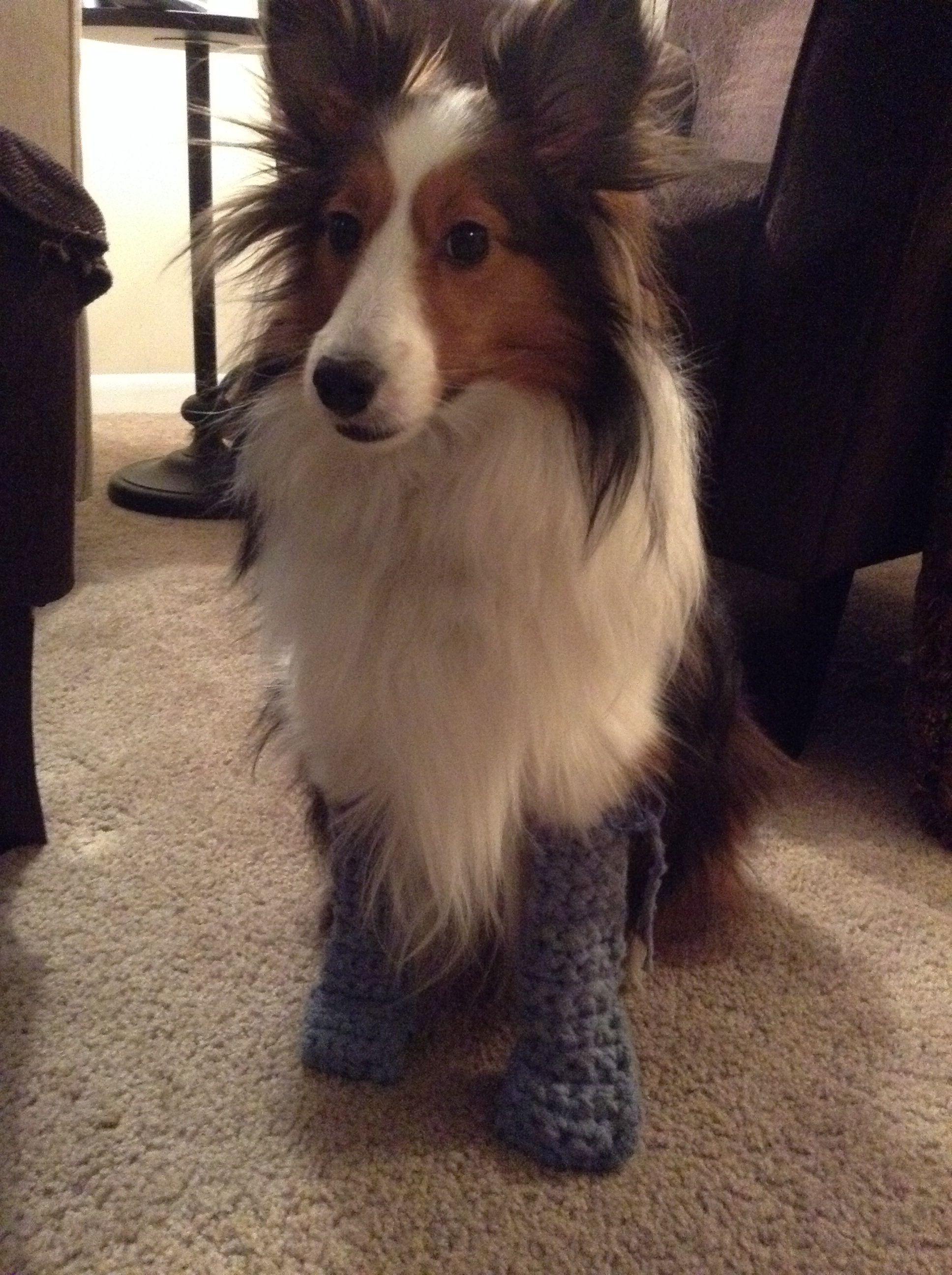 Crochet dog booties | Crochet ideas | Pinterest | Hundebekleidung ...