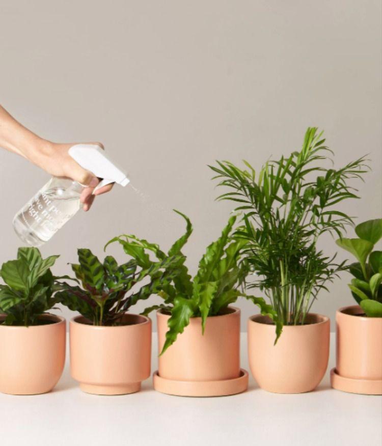 Pet Friendly Plants Monthly Subscription In 2020 Plants Pet