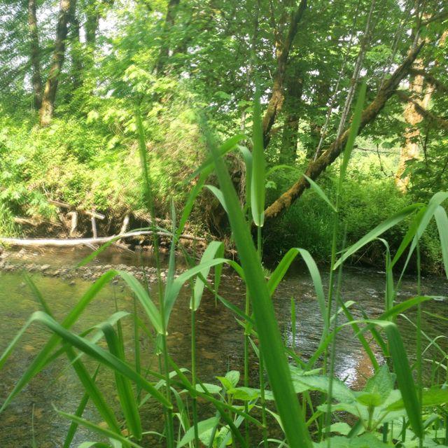 Rock creek on the Alsea highway