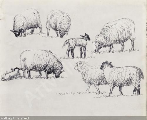 Line Drawing Images Of Sheep : Ideas about sheep tattoo on pinterest black