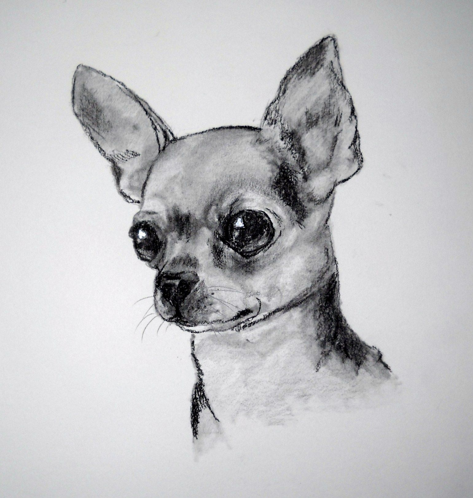 Dachshund Clube Chihuahua Drawing Chihuahua Art Dog Paintings