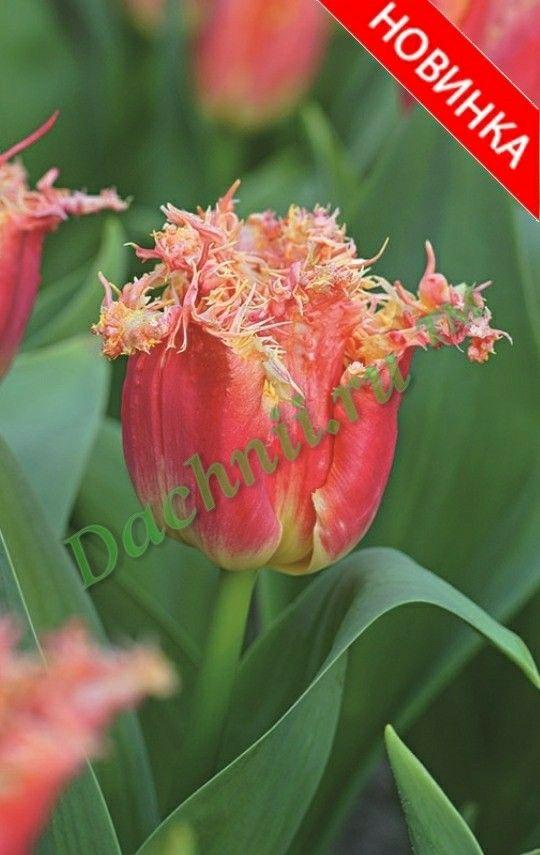 #тюльпаны #цветы #цветывспб #купитьтюльпаны #красивыецветы ... Цветочки Розы