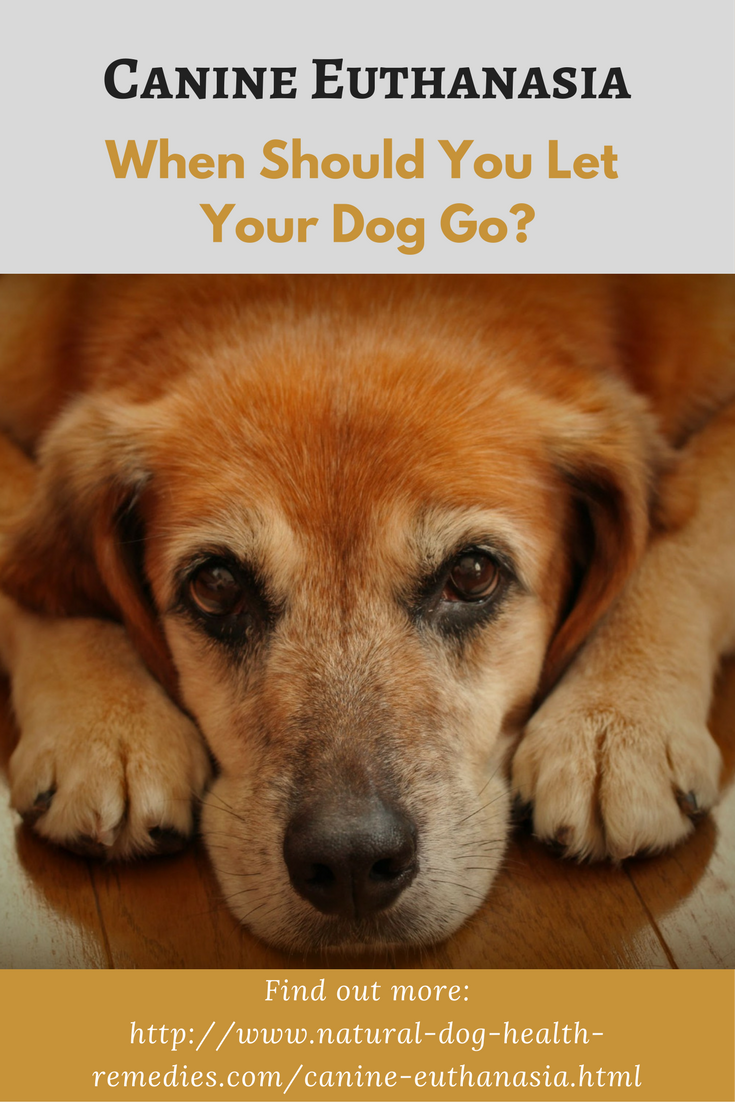canine euthanasia - a dog owners' guide | for my dogs | dogs, pets
