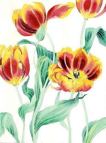yellow and red tulips 1 | yellow and red tulips watercolour … | Flickr