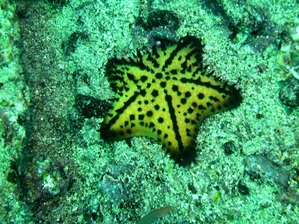 Starfish Anatomy Worksheet Outlook