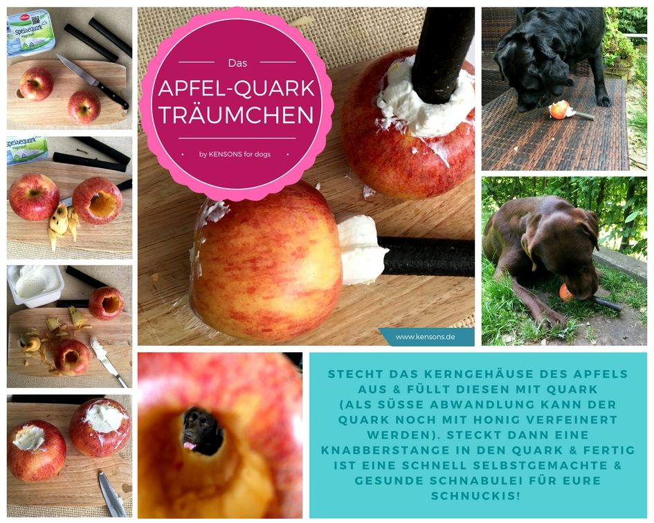 Apfel-Quark-Träumchen! Hunde-Leckerlie, schnell selbstgemacht! Gesund, natürlich und erfrischend!