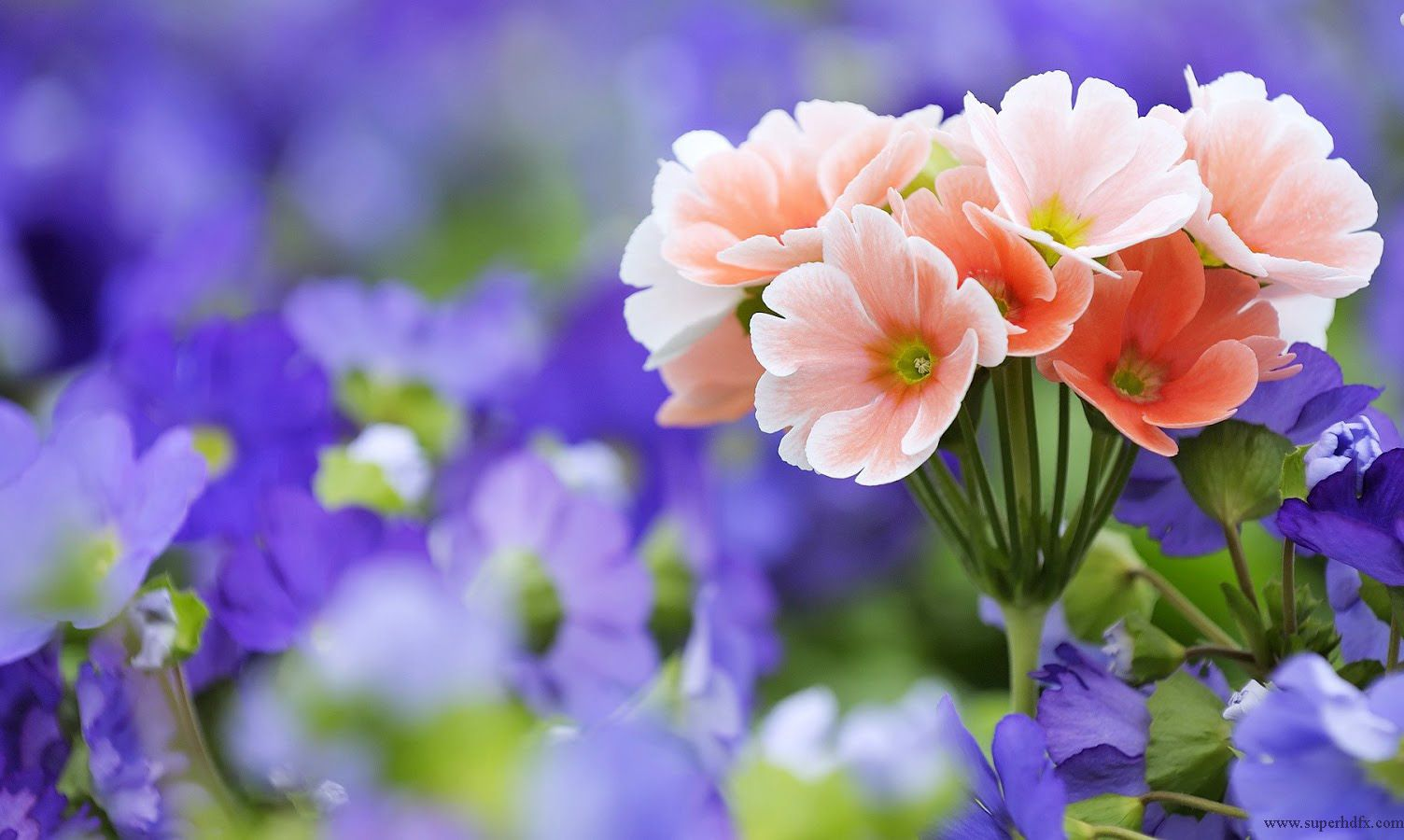 Beautiful Spring Day Hd Desktop Wallpaper High Definition 1504900