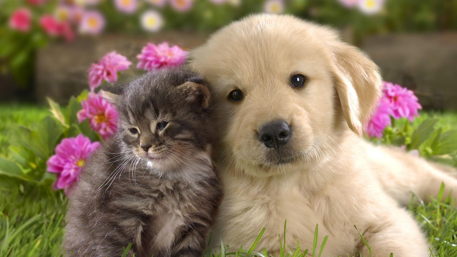 animal cute and funny wallpaper free download | free wallpapers and
