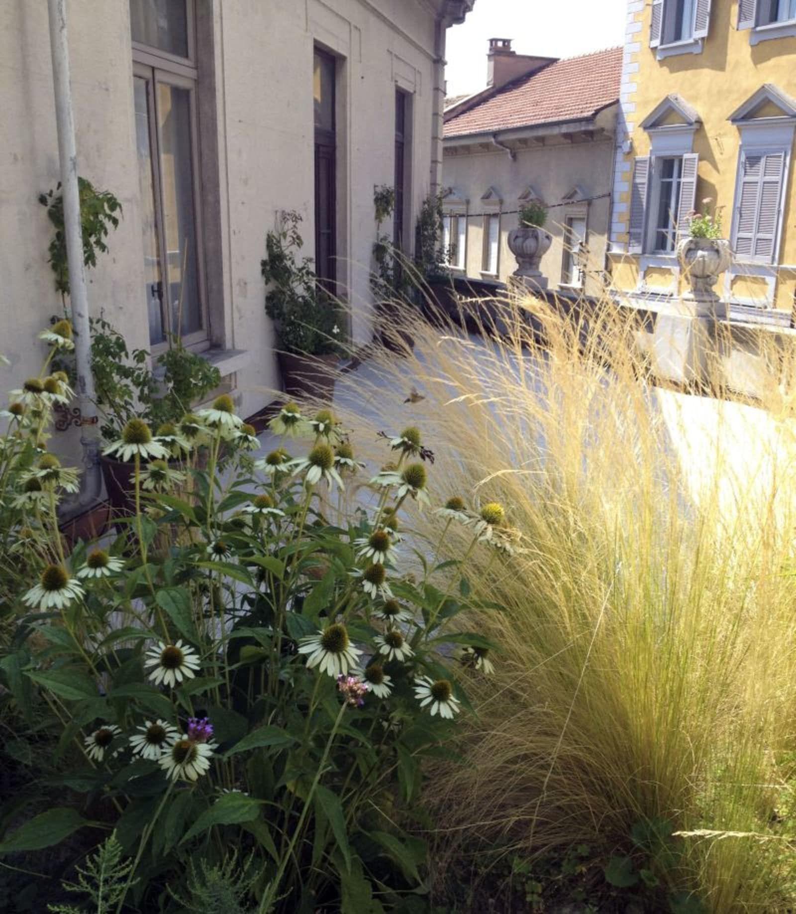 Anna Regge · Fiori e graminacee in terrazzo | Giardino | Pinterest