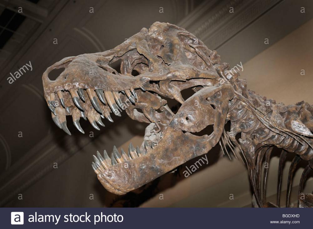 Carnivore Dinosaur Skull Google Search Character Design Inspiration Character Design Design Inspiration